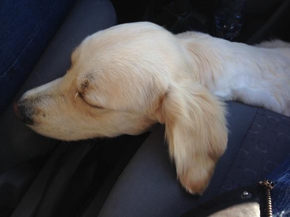 Ellie autos teel uude koju