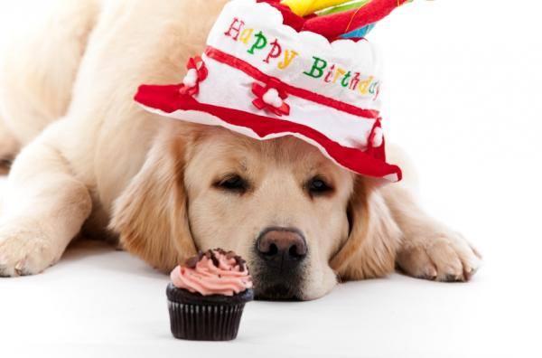 täna ei ole sünnipäev, seda juhtub pea-aegu iga päev... (3/6)