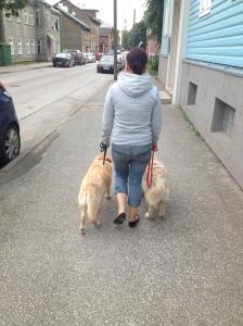 2 koeraga rakend