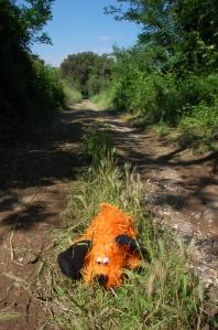Susco grüünes rajal jalutamas