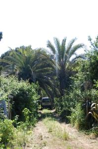 Kellegi palmidevaheline sissesõiduhoov keset grüünet