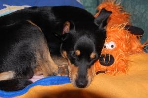 Njaki ja Susco koos voodil tudumas