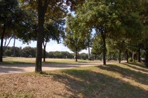 Tuttav park, ultimate frisbee plats